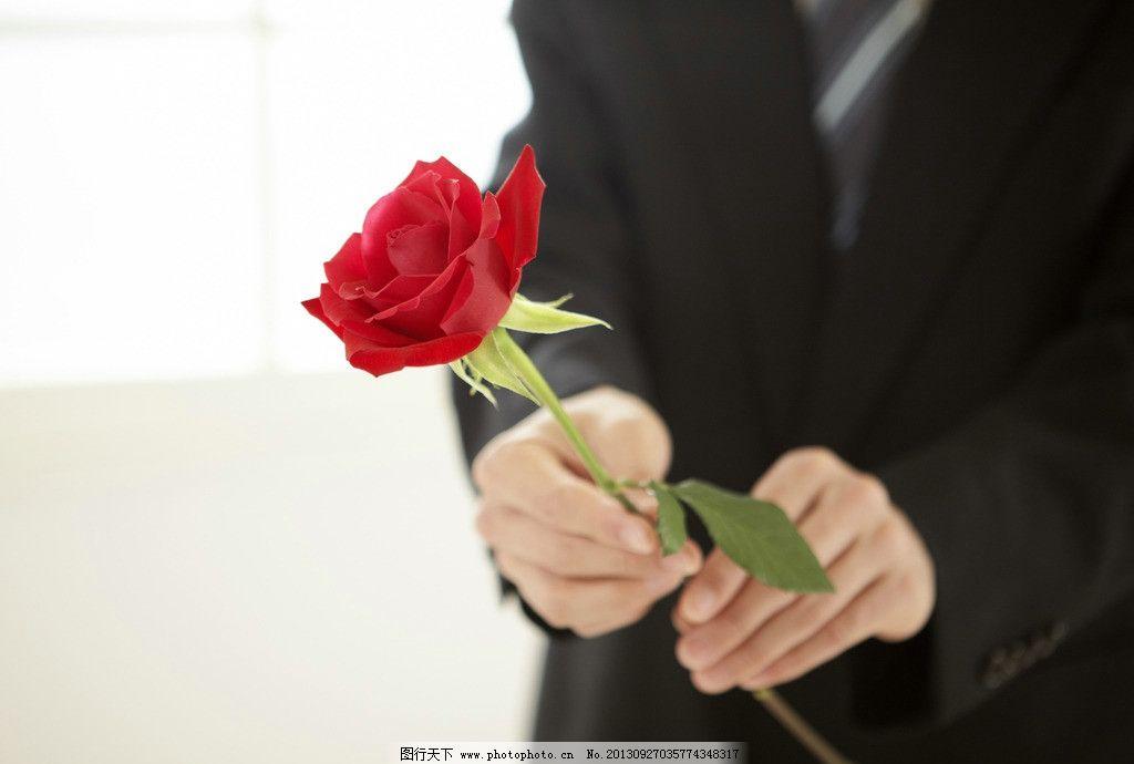 情人节礼物 玫瑰花节日礼物 红色玫瑰 手部特写 玫瑰图片 花草 生物