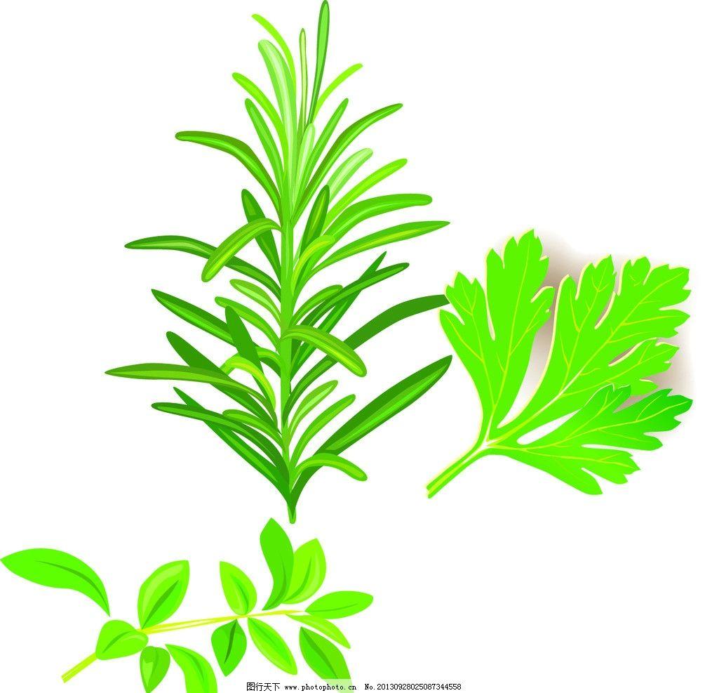 菜叶 叶子矢量素材 叶子模板下载 叶子 对叶 绿叶 矢量图 绿色 树叶