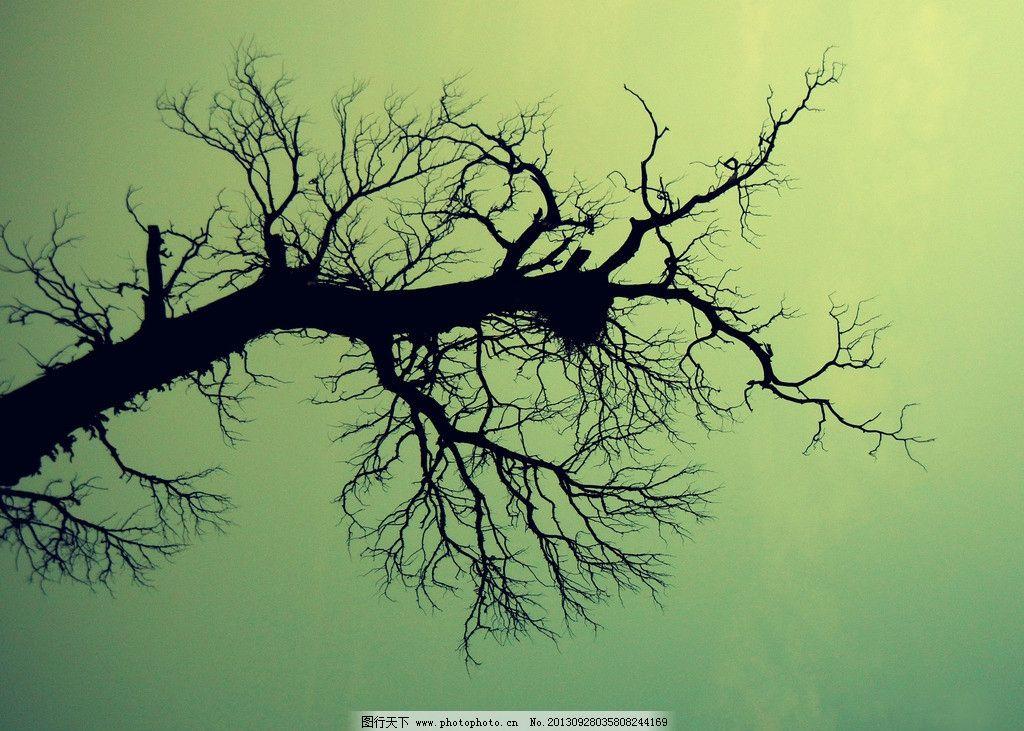 枯树蓝天图片