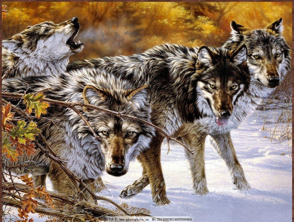 野生动物 野生 动物 狂野 雪地 群狼 绘画书法 文化艺术 设计 400dpi